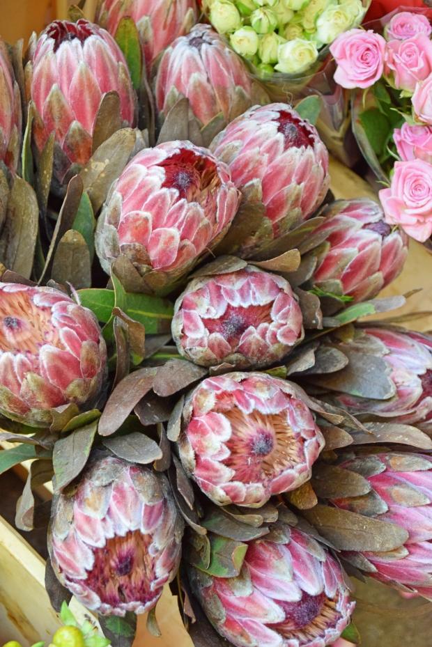 petitemod-roses (2)